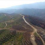 ترکی کے جنوبی  صوبہ ہاتا ئے میں 50  ہیکڑ پودے لگانے کی تیاری مکمل